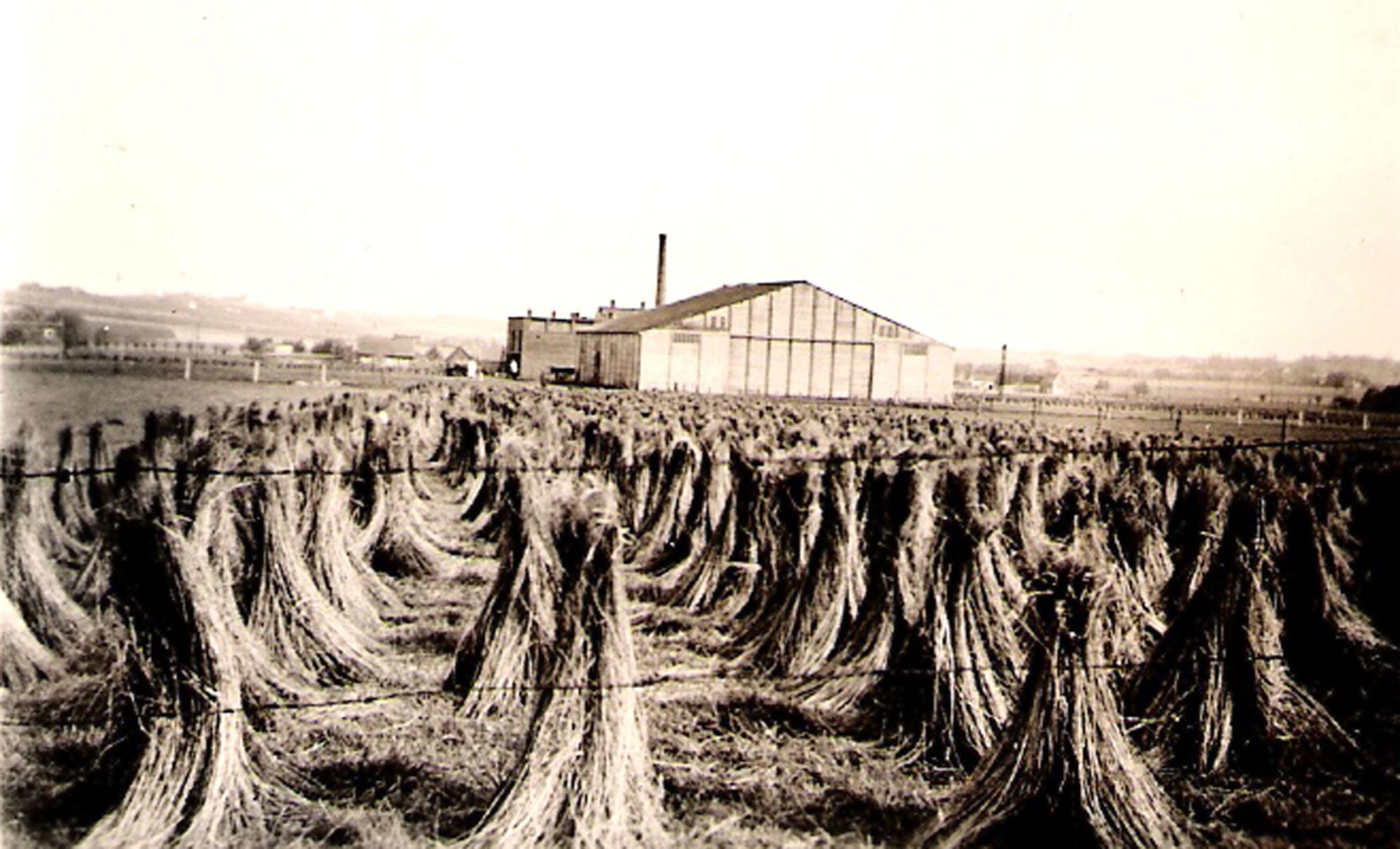 Vlasfabriek Wyseur