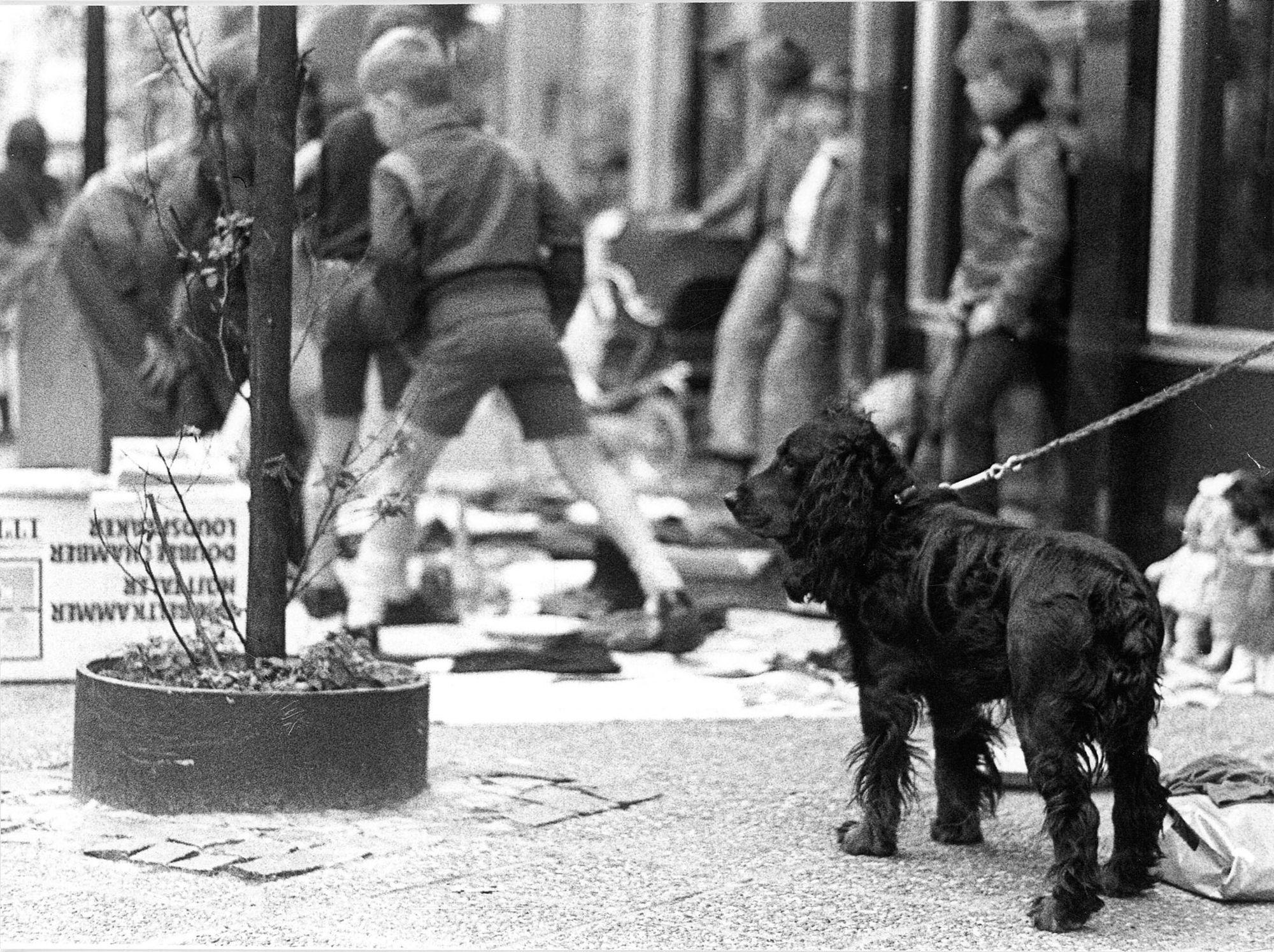 Sinksenfeesten 1975