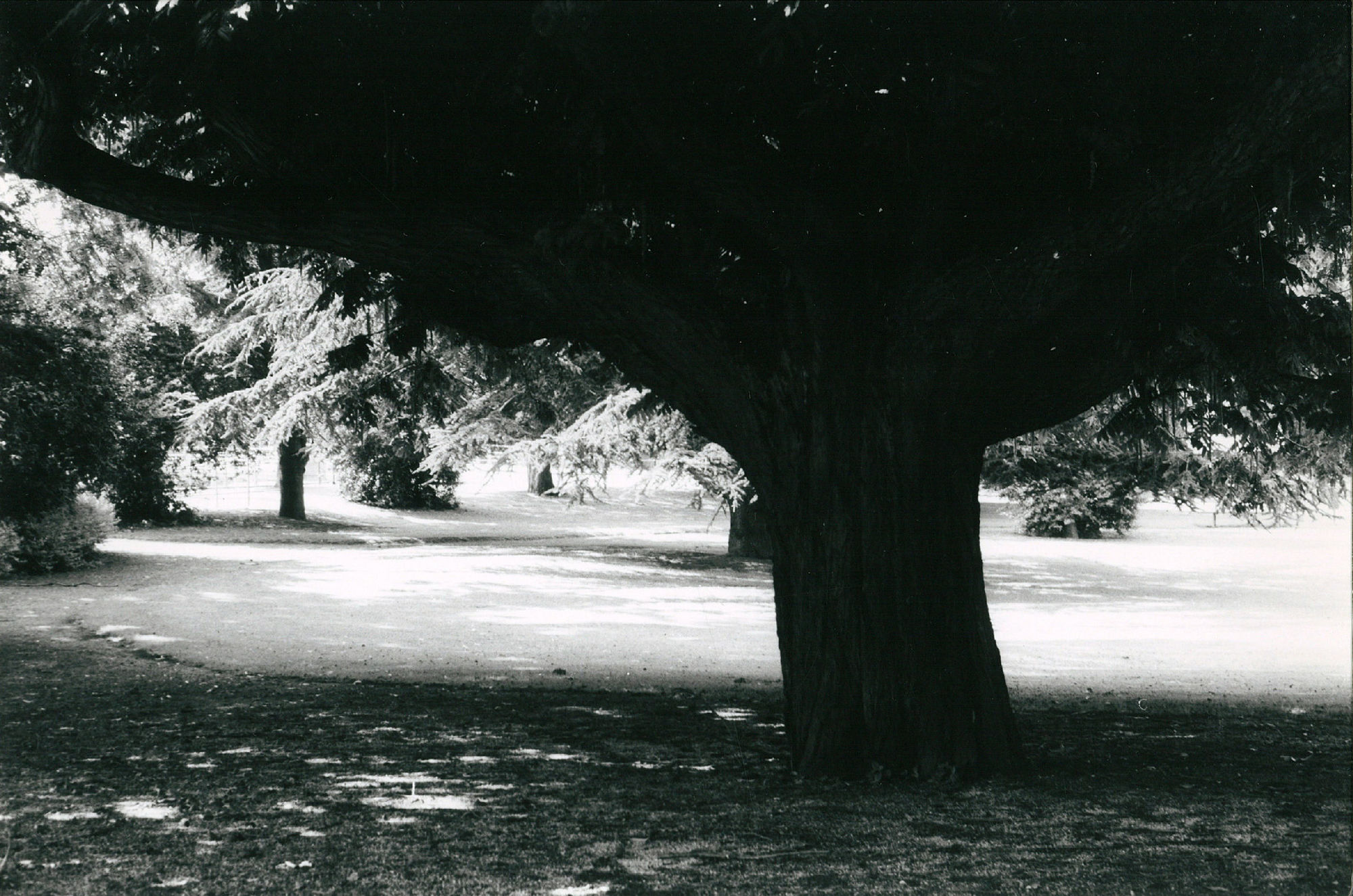 Het Koning Albertpark