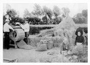 Westflandrica - oogst