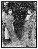 Westflandrica - Boerinnen tijdens de oogst